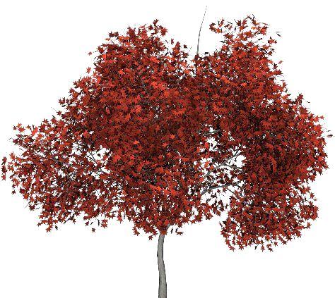 arbre, tube, png, feuilles, paysage