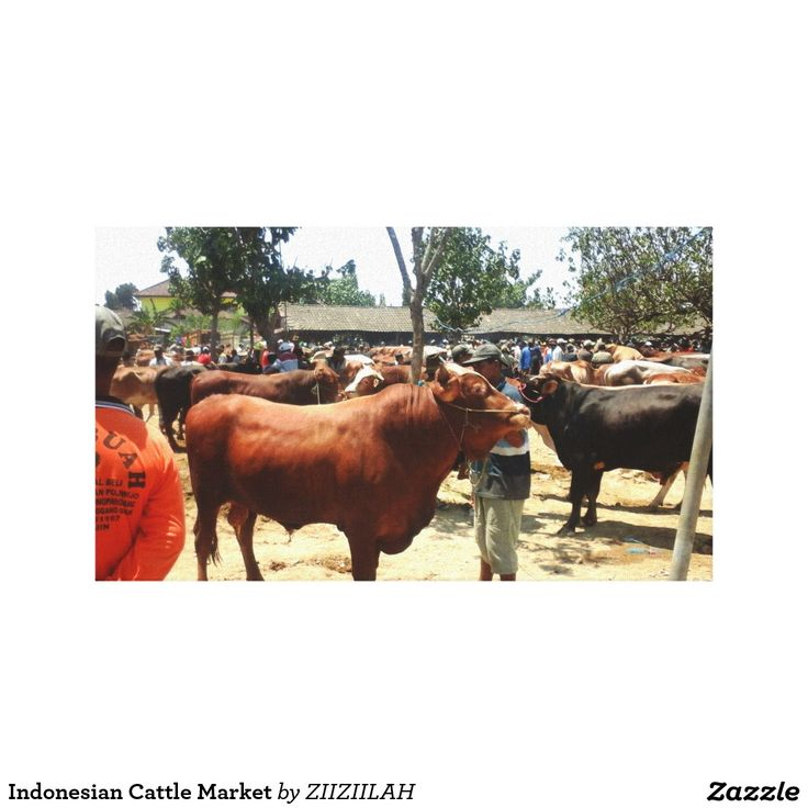 Indonesian Cattle Market Canvas Print