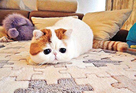 Snoop Cat | Cutest Paw