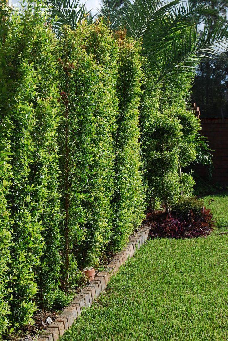 17 best images about outside on pinterest jasmine. Black Bedroom Furniture Sets. Home Design Ideas