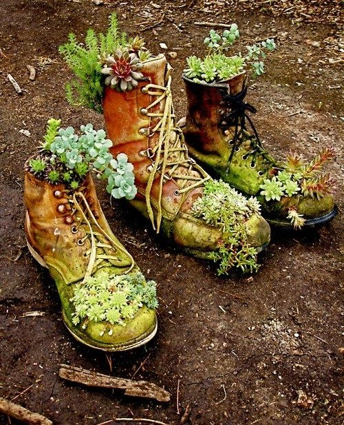 The dwarves never threw anything away if they could help it. Succulents planted in old weathered boots/shoes. Wonderful.