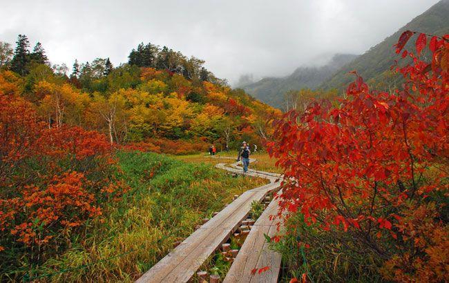 長野県小谷村の栂池自然園(2012年10月4日、平林敬一撮影)例年の見頃は10月初旬