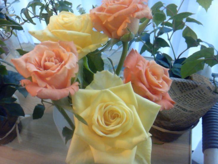 roses bulfrech
