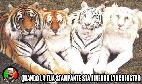 Tigri e inchiostro