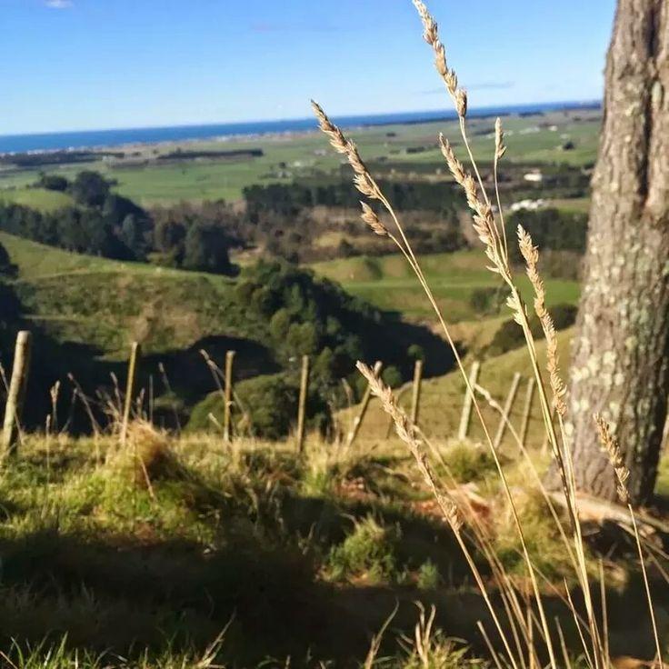 Papamoa Hills #bayofplenty #nz #newzealand