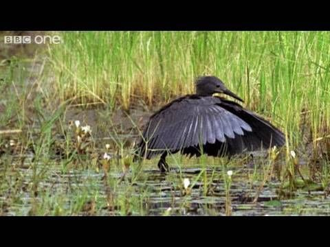 ▶ Funny Talking Animals - Walk On The Wild Side - Episode Three Preview - BBC One - YouTube