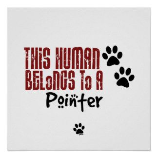 This human belongs to a Pointer.