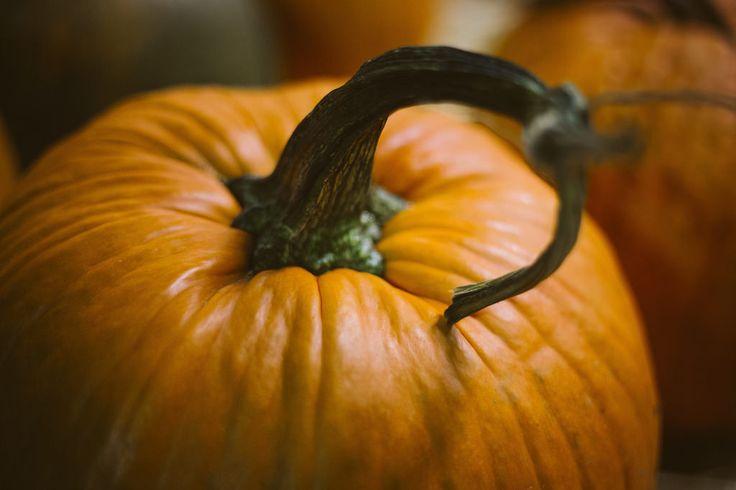 Descargar imagen gratis de una calabaza en alta resolución y de dominio público, para acompañar contenidos sobre Halloween o el otoño > http://imagenesgratis.eu/imagen-gratis-de-una-calabaza/