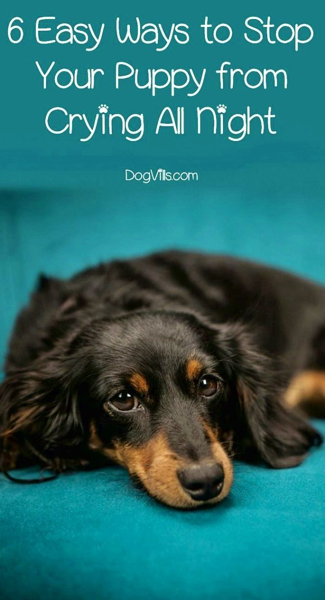 Dog Training If You Take Your Pet Dog With You Whenever You Travel Pack Everything He Needs For Eating Eat Elderly Dogs Dog Training Dog Training Obedience