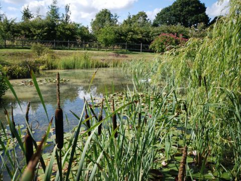 Garden Design - Evolving Spaces Landscape Designs LTD - Planting.