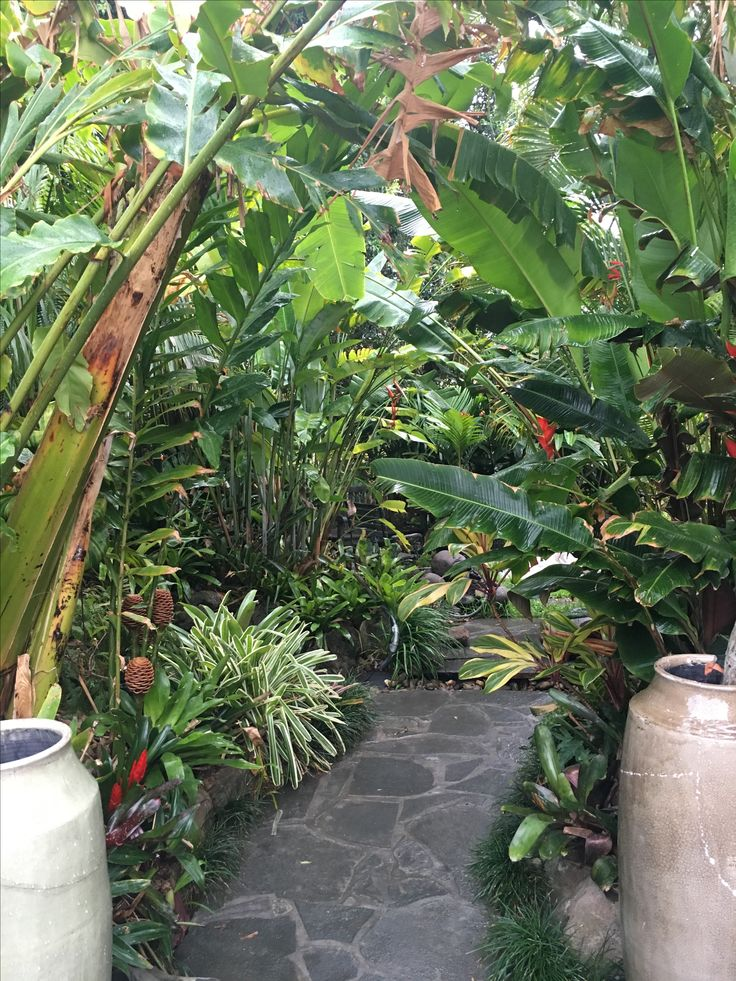 Tropical Garden path - curved lines create a sense of journey amidst bromeliads, palms, gingers and heliconias