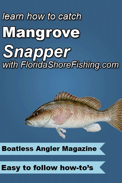 1000 images about florida fishing on pinterest the fly for Learn to fish