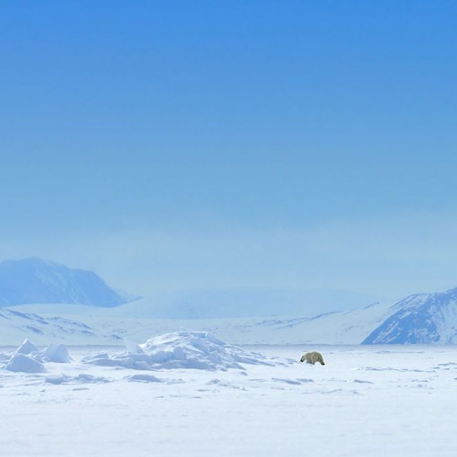 """Se amate l'avventura, questa è la meta ideale per organizzare una """"gita"""" fuori dall'ordinario. Siamo sull'isola di Baffin, dove è possibile dormire sul ghiaccio, avvistare animali rari, farsi una birra in compagnia degli orsi polari etc. Se siete pronti a partire, qui trovate tutte le info per prenotare il viaggio."""
