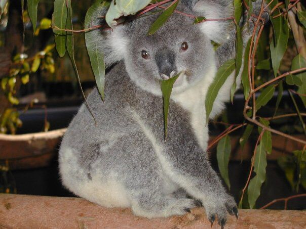 It was great to visit this and see, what they are doing to help this koalas