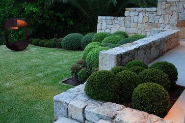 By closely grouping clipped evergreen balls, a formal version of cloud hedging can be created. The best plants to use in any form of cloud hedging are those with small foliage that will take close clipping: boxwood (Buxus sempervirens), English yew (Taxus baccata), Japanese holly (Ilex crenata) and Osmanthus varieties.