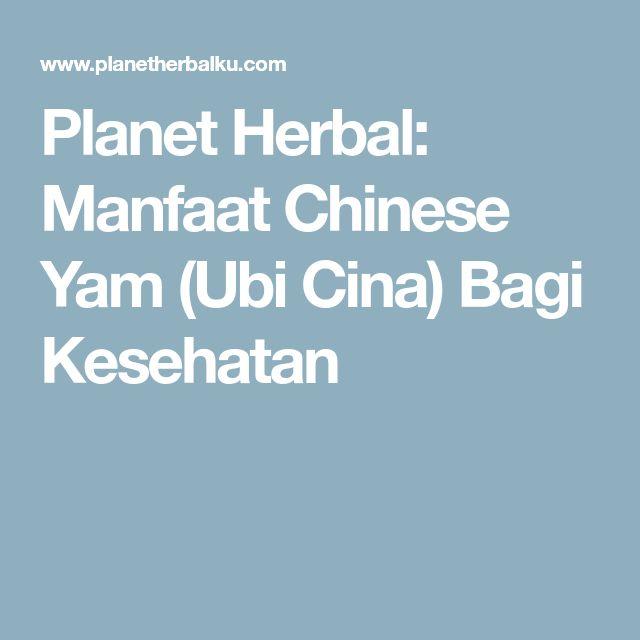 Planet Herbal: Manfaat Chinese Yam (Ubi Cina) Bagi Kesehatan