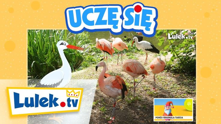 Część 5 - Wywiad z Bocianem - Wiem, ile zjem! - Film edukacyjny dla dzieci