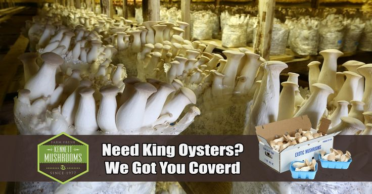 King Oysters go by many names including Royal Trumpet, French Horn, Brown King and Boletus of the Steppes. - http://kennettmushrooms.com/product-category/king-oyster-mushrooms/#utm_sguid=187176,00c81410-9bc3-106d-75b7-9f911f24b47f - They are low in Sodium and very low in Saturated Fat and Cholesterol. It is also a good source of Protein, Thiamin, Vitamin B6, Folate, Iron, Magnesium, Zinc and Manganese, and a very good source of Dietary Fiber #foodie #healthyliving
