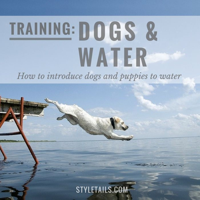 How To Introduce Dogs And Puppies Water