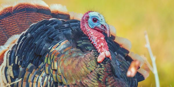 petition: Pledge to Have a Vegan Thanksgiving!, United States