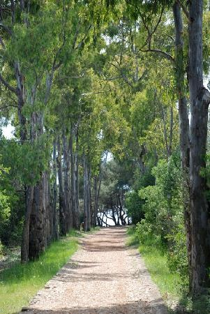 Ile St. Marguerite - Tree lined walk
