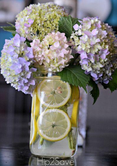 Best lemon flowers ideas on pinterest diy flower
