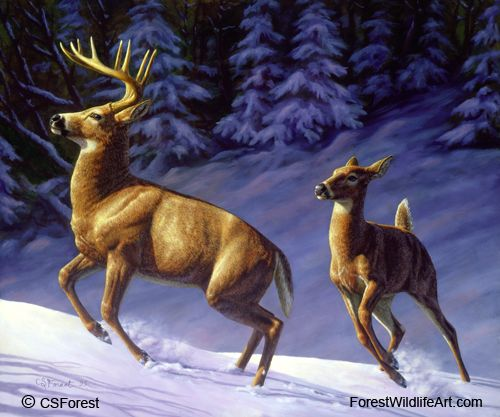 Oil painting of whitetail deer in snow by wildlife artist Crista Forest. ForestWildlifeArt.com - Fine Art Prints starting at just $25. Notecards also available. Get them here: http://fineartamerica.com/profiles/crista-forest.html