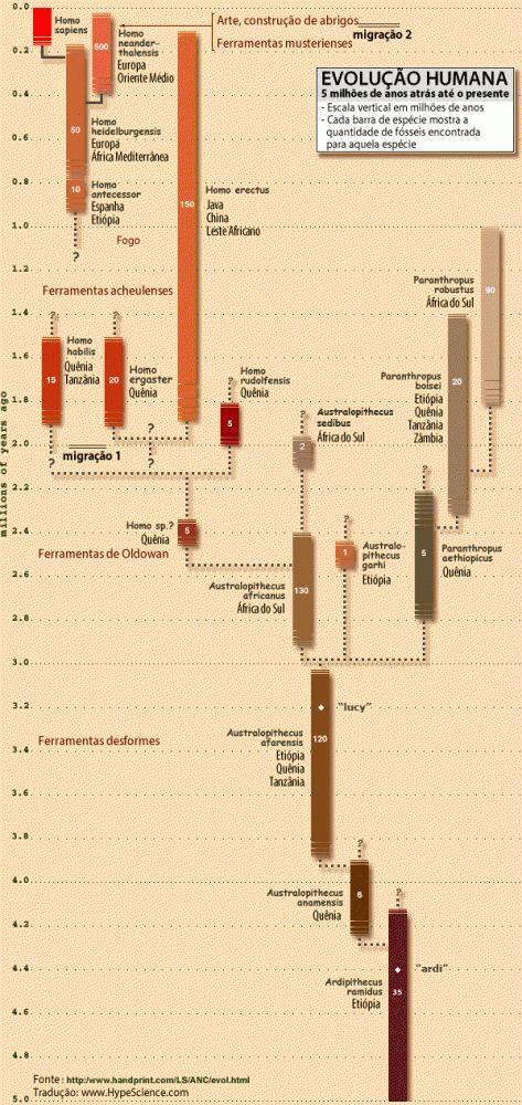 Os seres humanos (Homo sapiens) anatomicamente modernos originaram-se na África há cerca de 200 mil anos, atingindo seu comportamento moderno conhecido há apenas cerca de 50 mil anos. O caminho foi longo até aqui: confira as peças da árvore genealógica humana que abrange nossa evolução desde 5 milhões de anos atrás até o presente.