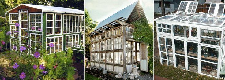 Gamla fönster går att återvinna till drivhus, små lusthus och större växthus. Här finns inspiration till både klassiska, romantiska växthus, som rustika stilar. Det kluriga är att pussla och få ihop tillräckligt många.