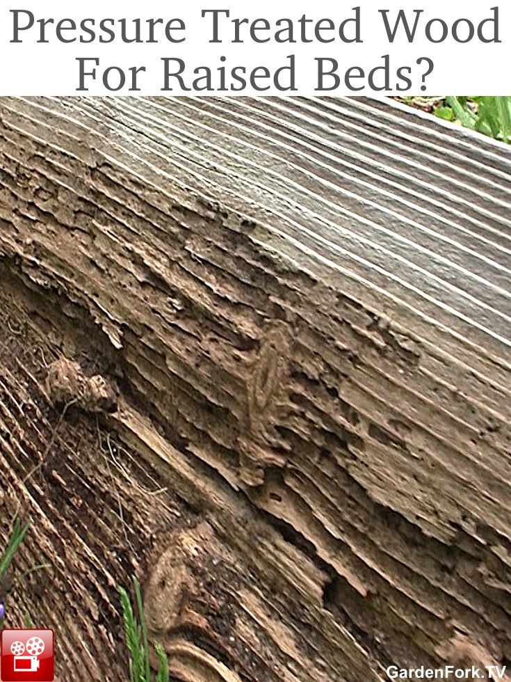 Pressure treated wood for raised beds