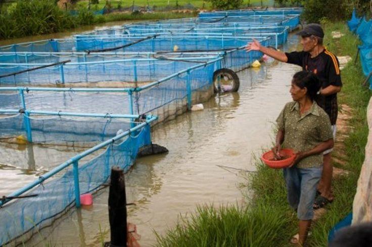 Image of: Aquaculture Backyard Fish Farming