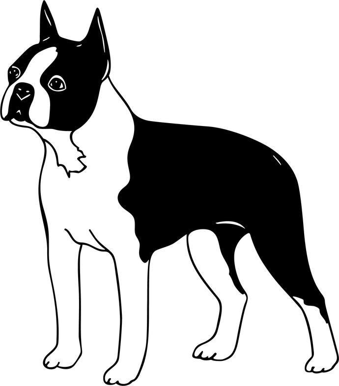 Bildergebnis F 252 R Boston Terrier Clipart Cameo Boston