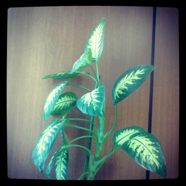 Planta da Rosibel. - @macfa40- #webstagram