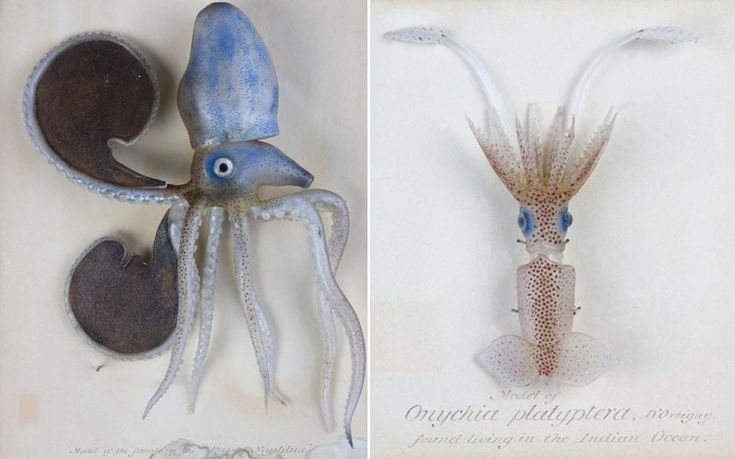 The Natural History Museum's new 'Treasures' Gallery will feature 'exquisite   crafted glass Blaschka models of marine animals, including jellyfish and   octopus.