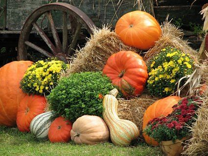 and of course you have to have mums, pumpkins, gourds, and hay! and apparently the occasional wagon wheel for rustic charm, lol