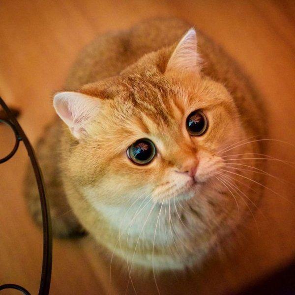 Japán leghíresebb cicájának fotóinál nem lesz ma cukibb   Diamonds