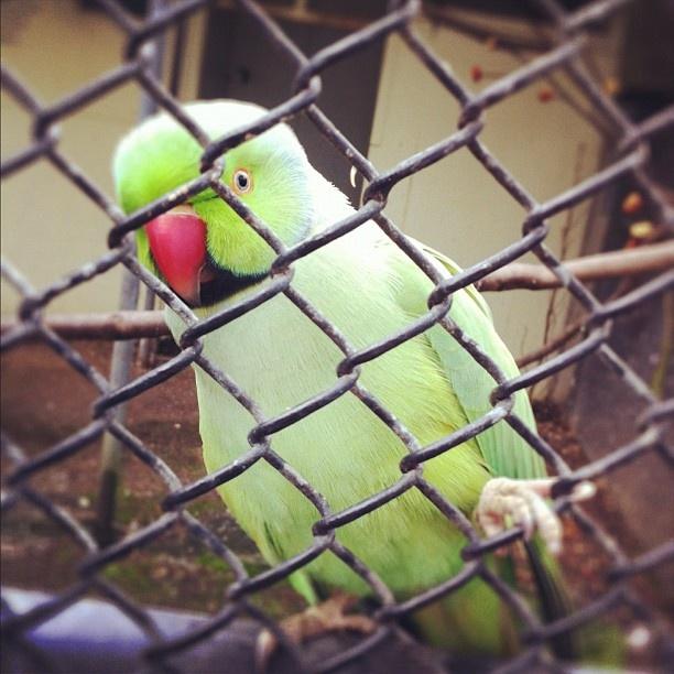 I'm looking right back at ya. Kowhai Park, #feilding #bird #nz #newzealand #instagram