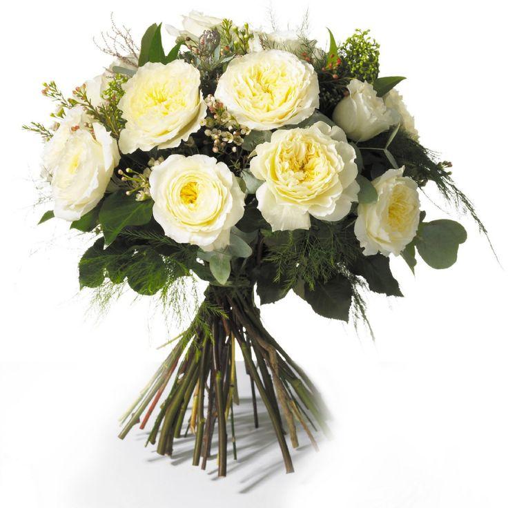White Patience Garden Rose 93 best flowers garden roses images on pinterest | garden roses
