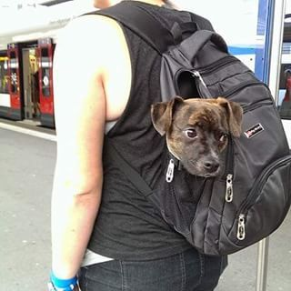 This pint-sized pal who got a little carried away. | 19 Magnificent Mutts You'll Wish Were Yours