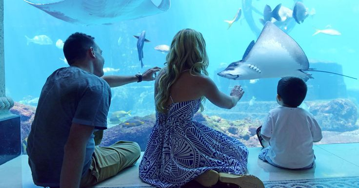 Bahamas Vacation Packages & Travel Deals | Atlantis Bahamas