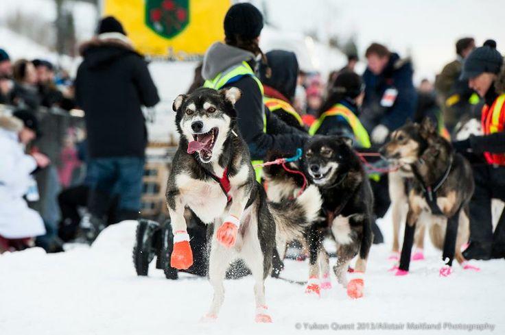 dog sledding in nunavut