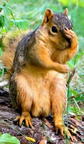 PetsLady's Pick: Funny Absent-Minded Squirrel Of The Day...see more at PetsLady.com -The FUN site for Animal Lovers