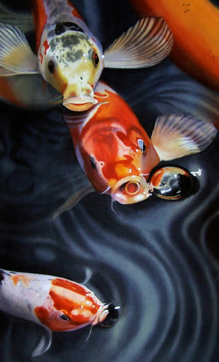 858 best Koi images on Pinterest | Water features, Ichthys and Koi ...