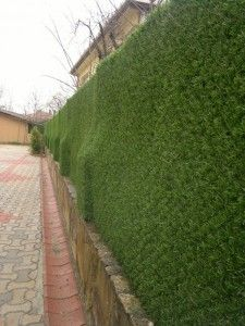 çimçit duvar