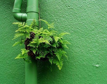 guerrilla-gardening
