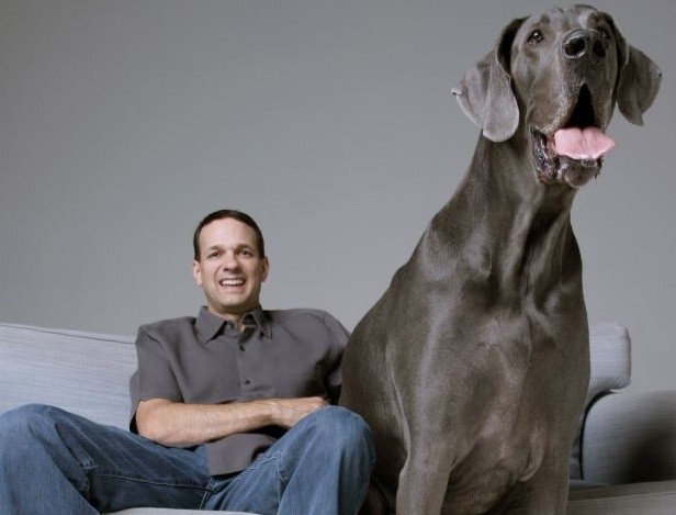 """George, world's largest dog.  I just went and looked this up and it's real - George weighs 245 lbs and is 43"""" tall.  He eats 110 lbs of food a month and sleeps alone on a queen size bed.  Can you imagine?  I wish I could meet him in person - he looks like a friendly enough fellow."""