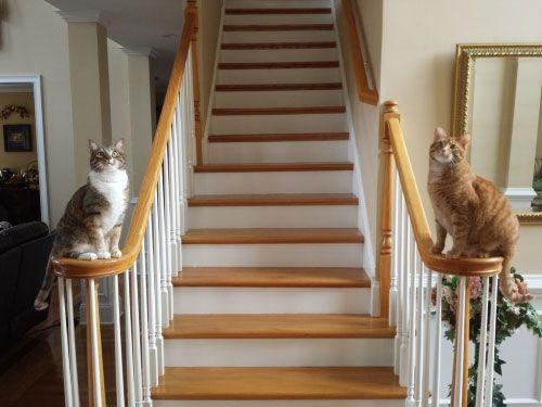 Смешные картинки про котов с надписями   Смешные ...