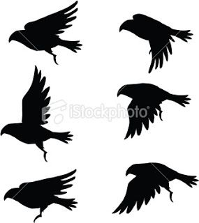 Mia- this one shows the bird, I like it very much, since I like birds fly, this one shows a sequence of the bird flying in the air, and how it play its wings, it is a kind of natural phenomena, but it shows the whole movement, it is a simple progression.