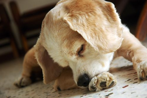 5 signs your dog is in pain