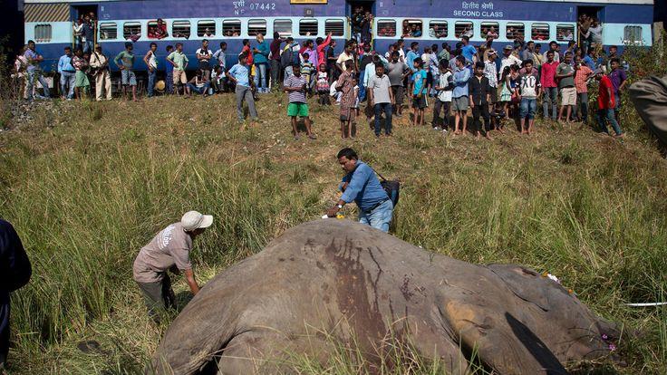 FOX NEWS: India passenger train hits kills 2 endangered Asian elephants